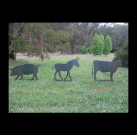 Animals on spikes. Made form 2mm mild steel with welded spikes for easy placement in the ground. We have many silhouette images of animals available and if we haven't got one on file we will make one up. These particular animals are approximately 900mm x 700mm and cost $100 each.